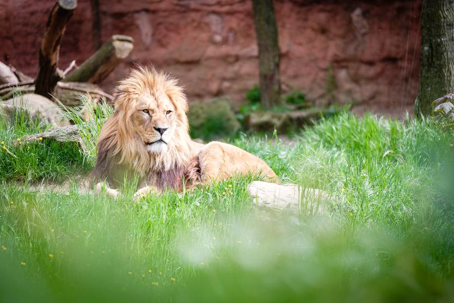 fotoexpedition-im-erlebnis-zoo